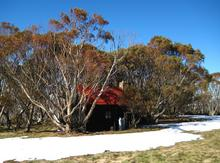Johnston's Hut