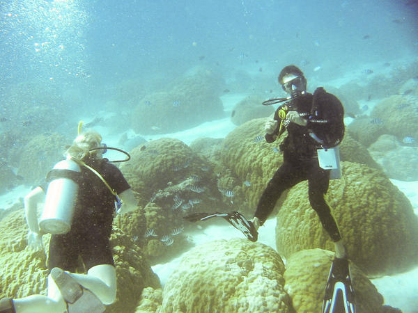 great_barrier_reef-20090606-2.jpg