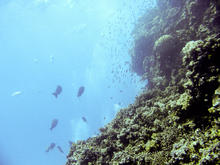 great_barrier_reef-20090606-8.jpg