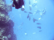 great_barrier_reef-20090606-9.jpg