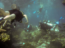 great_barrier_reef-20090606-15.jpg