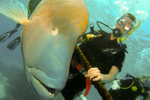 great_barrier_reef-20090606-17.jpg