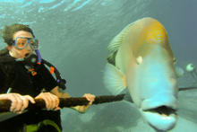 great_barrier_reef-20090606-18.jpg