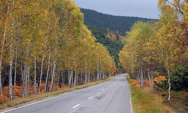 braemar_road_autumn_deeside_332