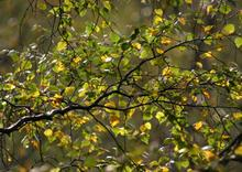autumn_deeside_037