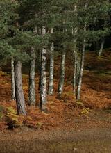 autumn_deeside_059