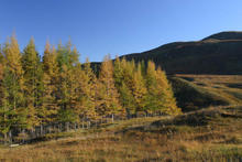 03_grey_corries_autumn