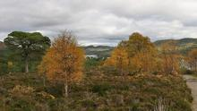 glen_affric_view_pan1_crop