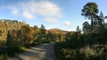 glen_affric_walk_pan1